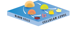 The Cell Level
